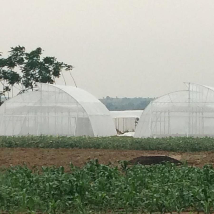 IGPL_Greenhouse